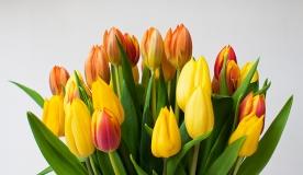 Florist oder Online-Blumenshop - Was ist besser?